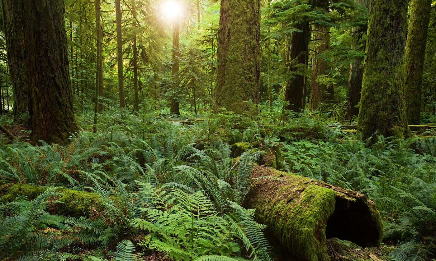 Equal Table Event: Do we need to change our relationship with the natural environment?