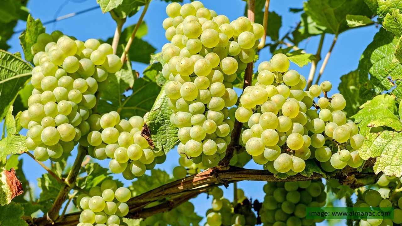 Joining on the grapevine…