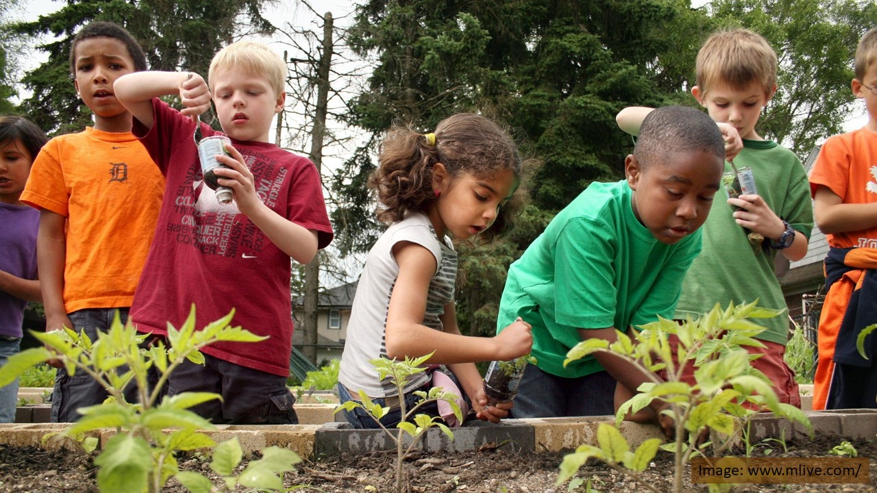 Planting ideas and veggies at school